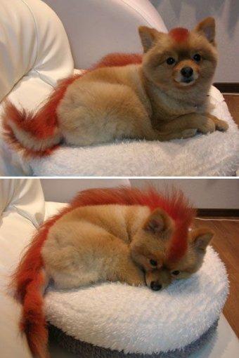 firefox_dog.jpg