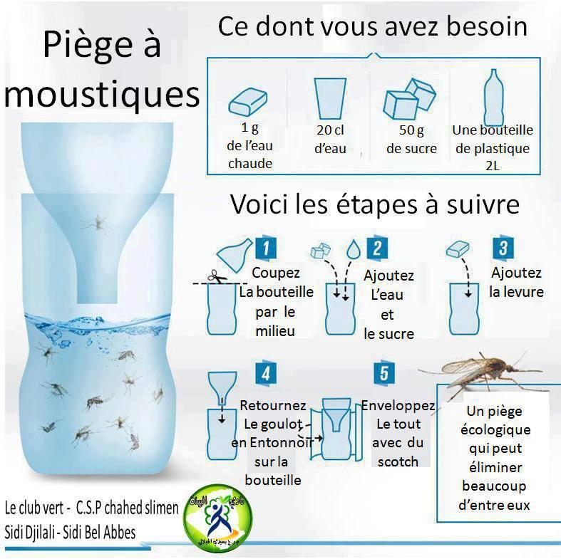piege-moustique.jpg