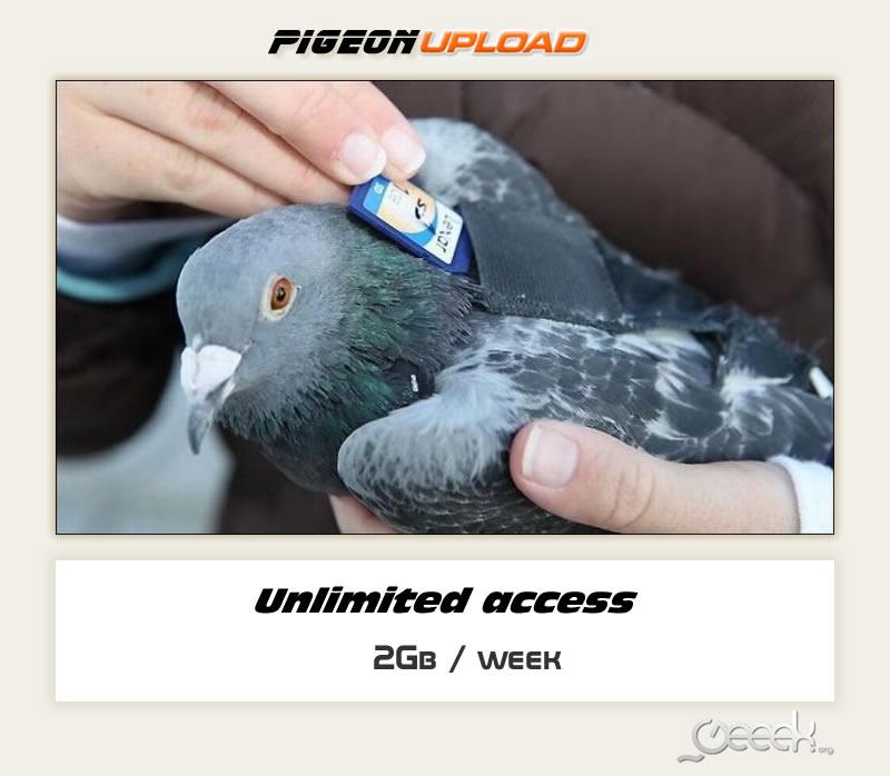 PigeonUpload.jpg