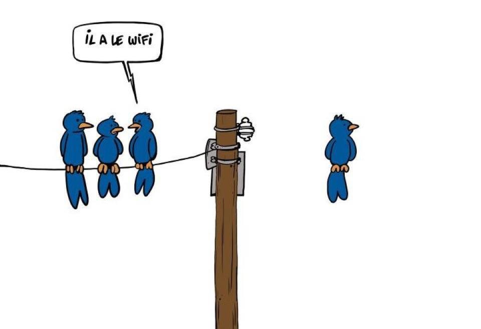 wifi-oiseau.jpg
